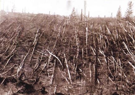 Copaci cazuti in urma meteoritului Tunguska
