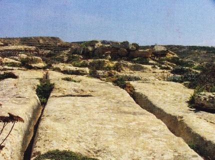 santuri-malteze