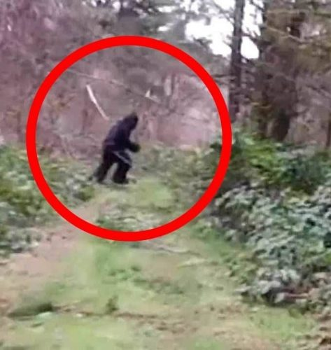 Bigfoot – Legenda sau un Sambure de Realitate?