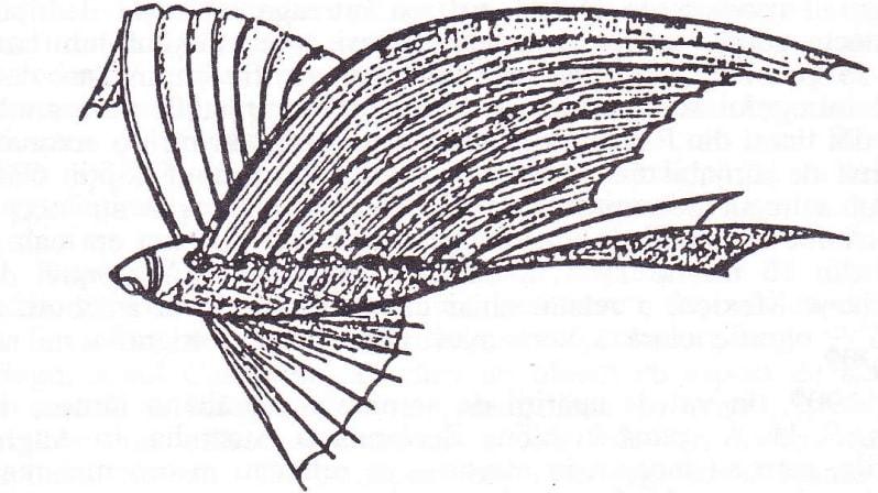 O aeronavă semnalată în Texas schiţată în ziarul Dallas Morning News, la 16 aprilie 1897