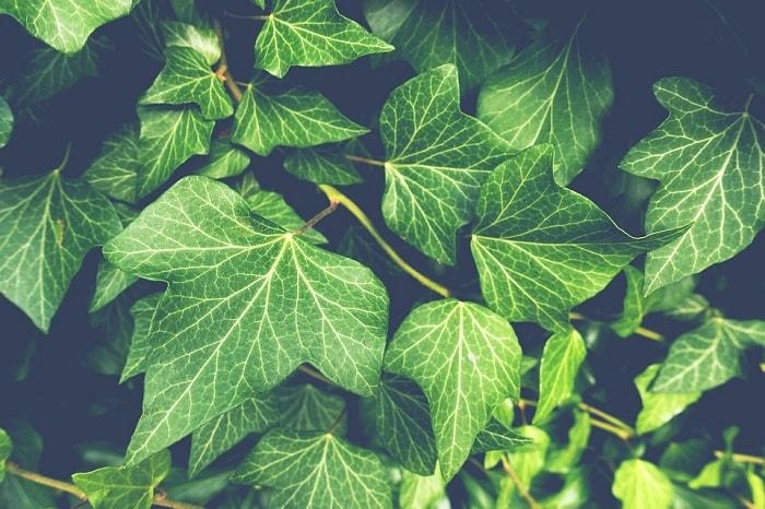 plante sensibile la cutremur