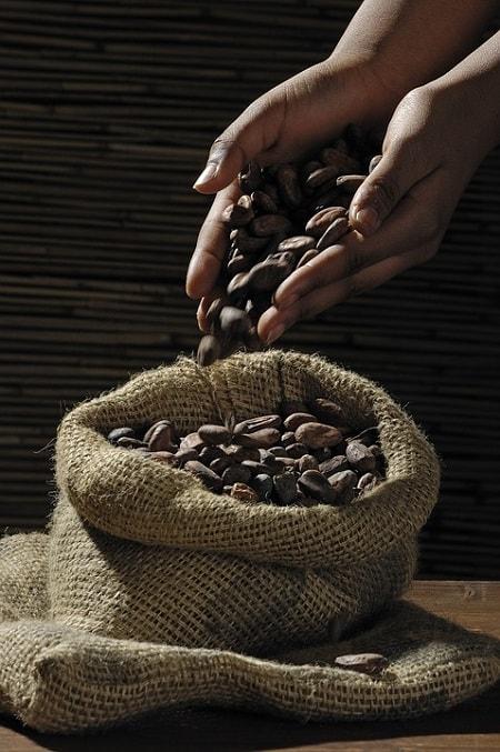 Seminte de cacao