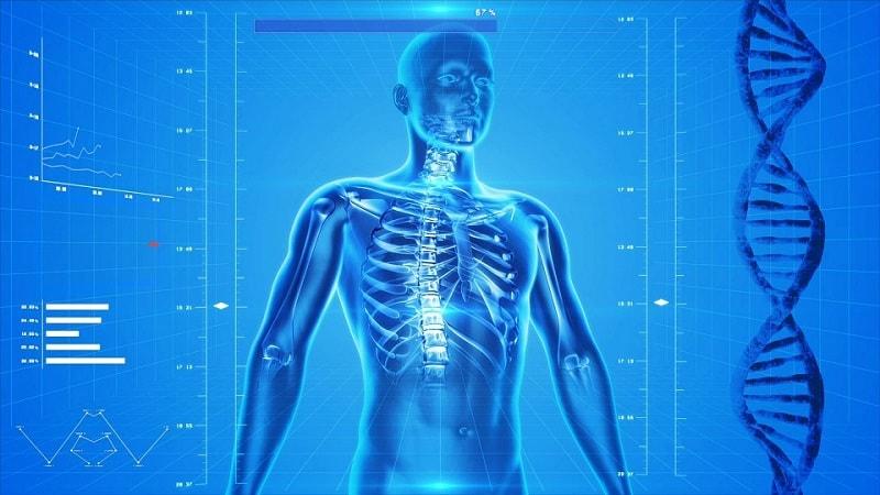 corpul uman - organism