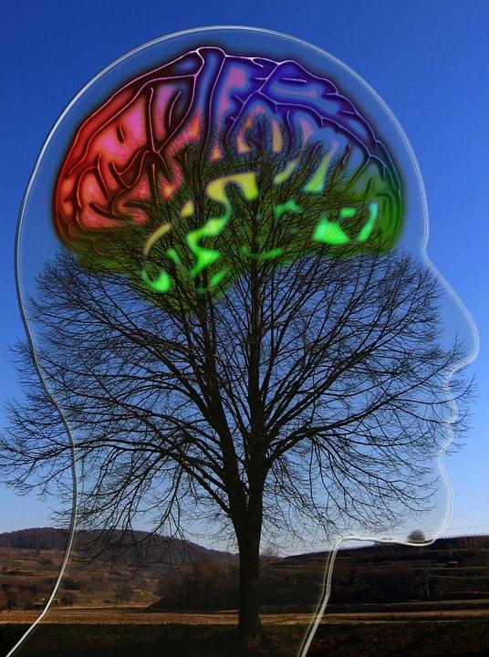 Creier pe coroana unui copac