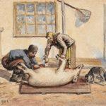 Ignatul Porcilor – Credinte si Superstitii despre Taierea Porcului