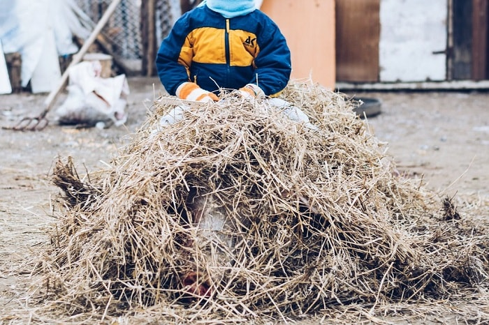 Copil suit pe porcul acoperit cu paie