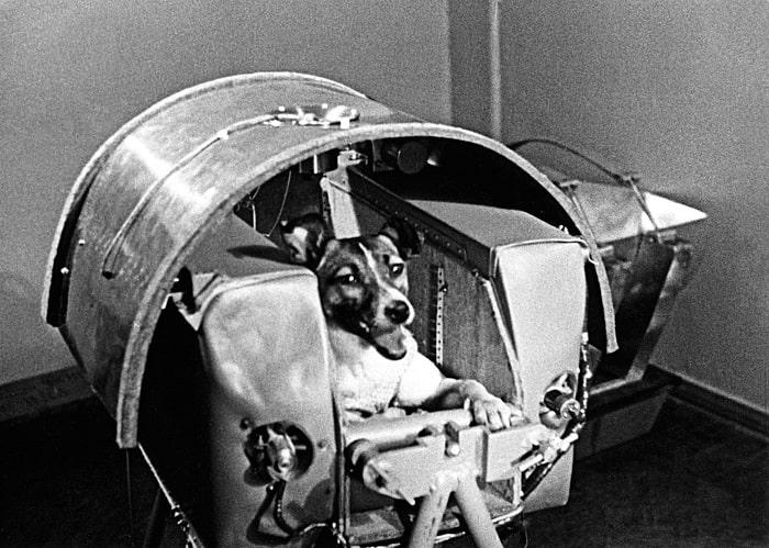 Laika - primul caine ajuns in spatiu