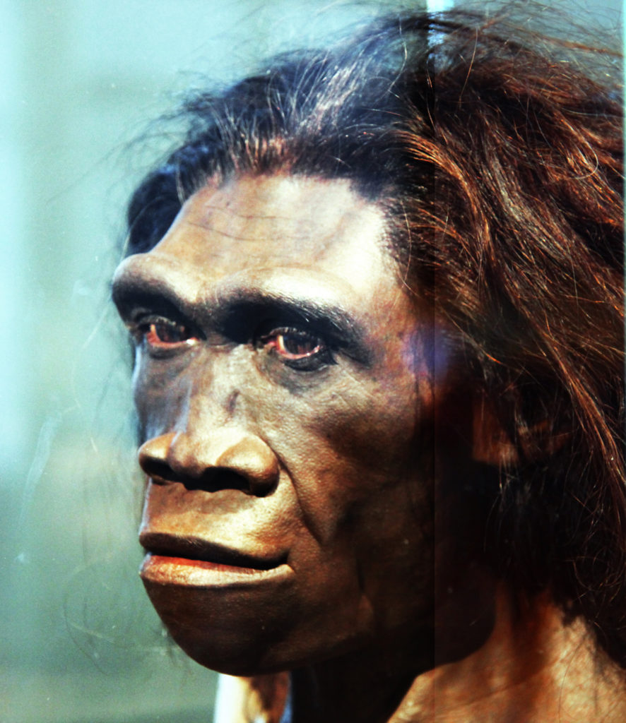 Homo Erectus (Femeie - Model de cap)