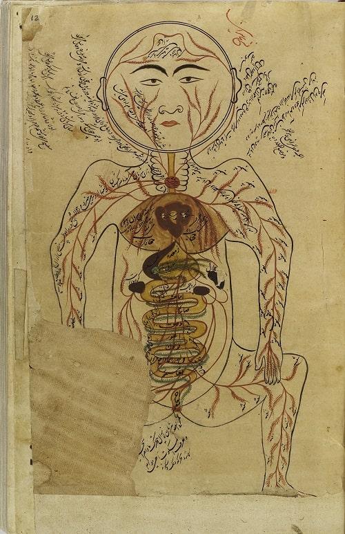 """Pagina cu organele si sistemul circulator al omului din """"Canonul Stiintei Medicale"""""""
