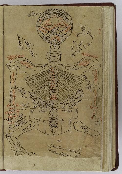 Scheletul Omului - Pagina din carte scrisa de Avicenna