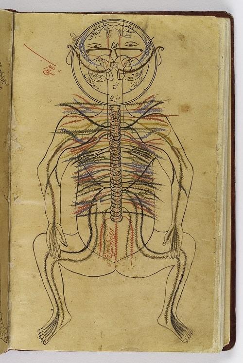 """Sistemul Nervos - Pagina din cartea   """"Canonul ştiinţei medicale"""""""
