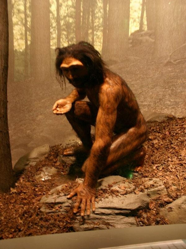 Homo Erectus (Reconstructie)