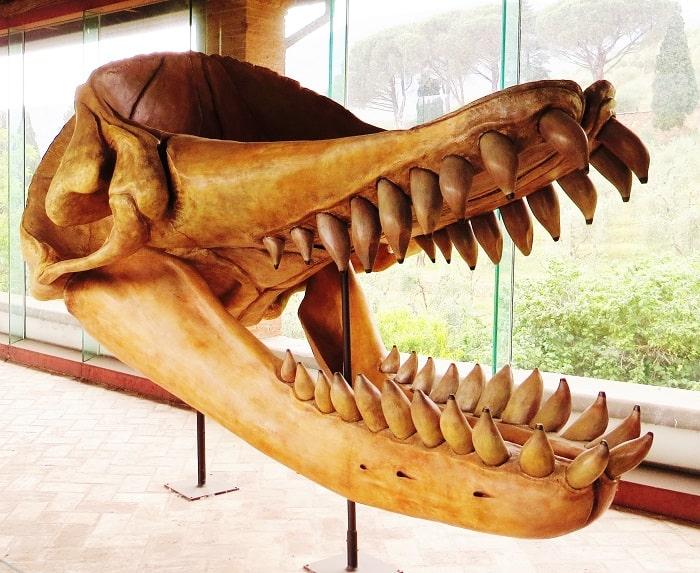 Capul reconstruit al unei balene-Leviathan