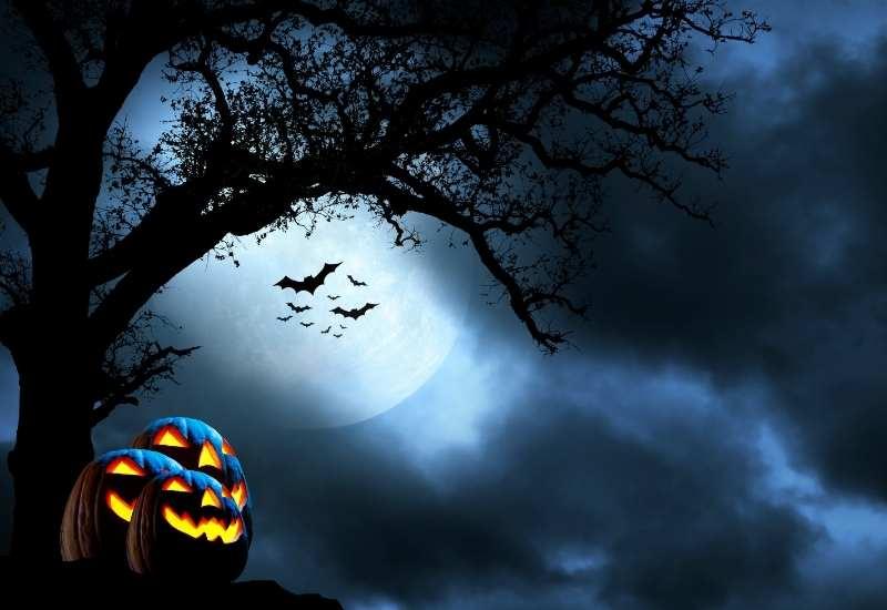 dovleci de halloweenin padure