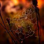 Panza de paianjen nu putrezeste – Cercetătorii au găsit motivul