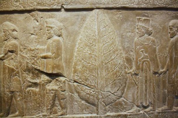 Zeul Soarelui Mithras lânga un brad vesnic verde