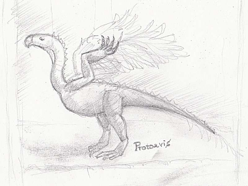 Desen creion Protoavis