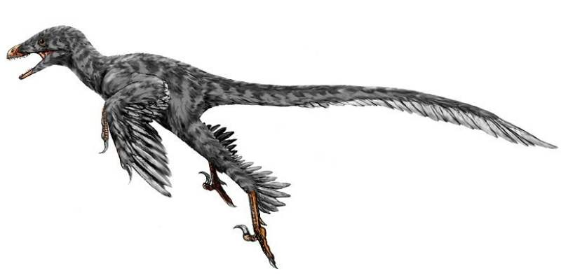Desen reconstituire Microraptor
