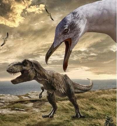 Evoluția păsărilor din dinozauri