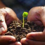 Plantele au emoții, sentimente și chiar comunică