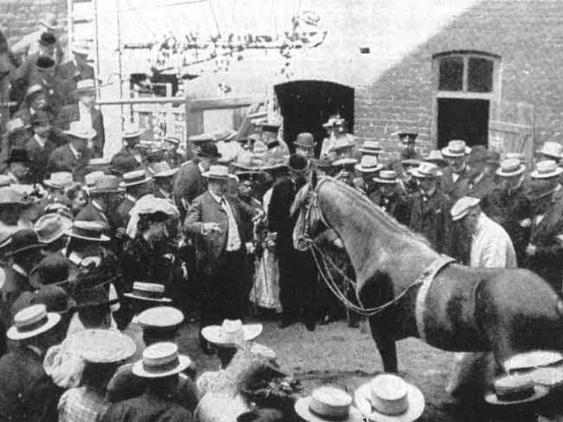 Multime adunată să vadă cu ochii lor capabilitățile calului Hans