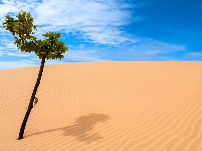 copac in desert