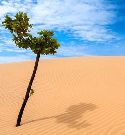Dioxidul de carbon înverzește deșerturile