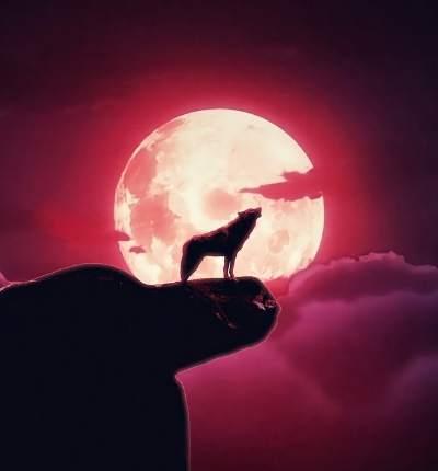 De ce urlă câinii și lupii la lună