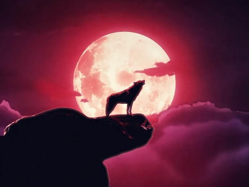 caine sau lup urland la luna